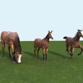现代动物马3D模型【ID:431813630】