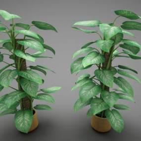 现代风格植物3D模型【ID:253473826】