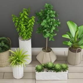 现代绿植3D模型【ID:244565868】