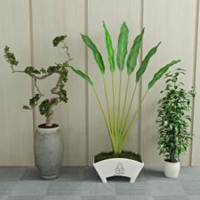 现代绿植盆栽3D模型【ID:231639832】