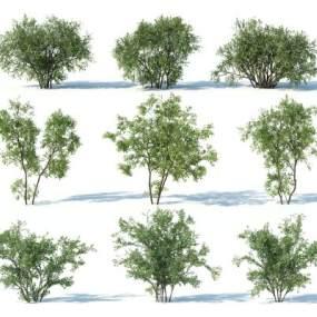 現代灌木3D模型【ID:249240823】