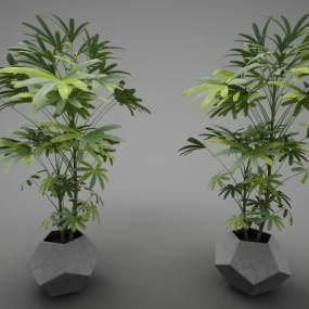 現代風格植物3D模型【ID:248180892】
