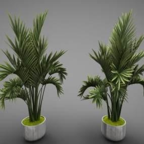 現代風格植物3D模型【ID:248216838】