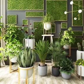 现代植物盆栽墙饰绿植花卉花草3D模型【ID:232004874】