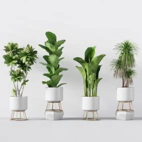 现代绿植花卉盆栽组合3D模型【ID:233406853】