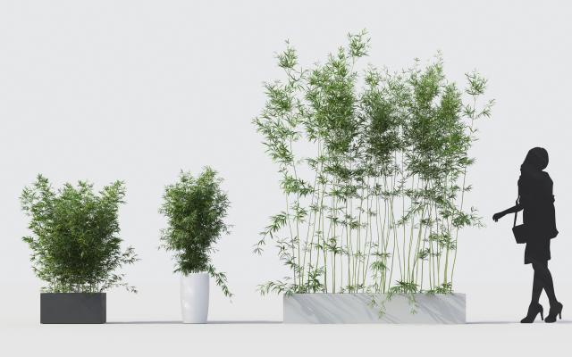 现代绿植竹子3D模型【ID:242493854】