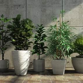 植物组合3D模型【ID:233511876】
