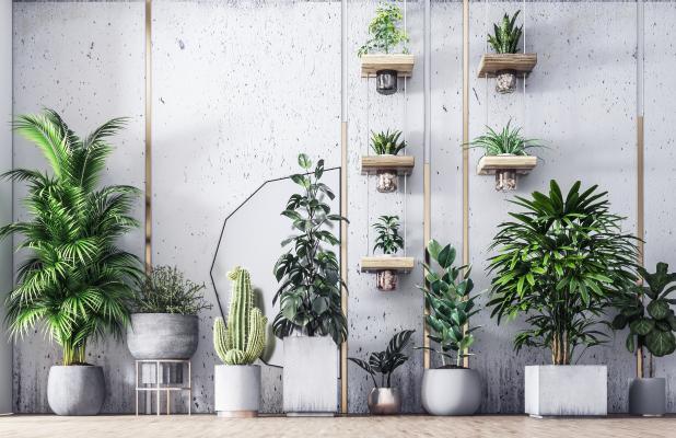 现代盆栽绿植组合3D模型【ID:249936893】