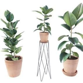 现代北欧植物盆栽组合3D模型【ID:233724888】