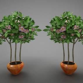 現代風格植物3D模型【ID:246940802】