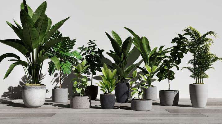 现代绿植盆栽组合3D模型【ID:245934814】
