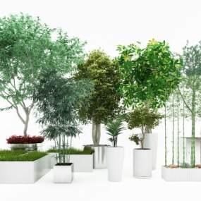 植物组合3D模型【ID:233509848】