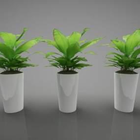现代风格植物3D模型【ID:250604864】