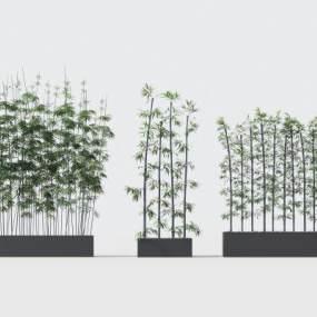 现代绿植竹子3D模型【ID:242493870】