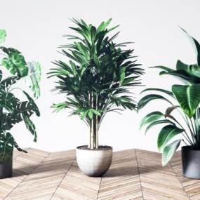 现代盆栽组合3D模型【ID:248960828】