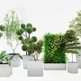 植物组合3D模型【ID:233509854】