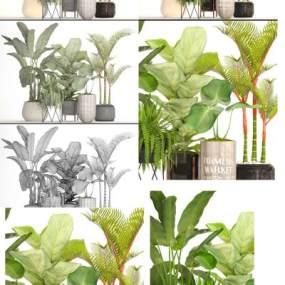现代植物盆栽3D模型【ID:235771896】