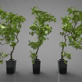 新中式植物盆栽3D模型【ID:244673859】