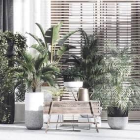 现代盆景盆栽植物组合3D模型【ID:245816843】