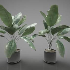 現代風格植物3D模型【ID:252624873】