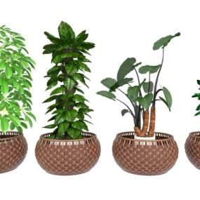 現代植物盆栽組合3D模型【ID:246717831】