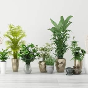 现代花草植物盆栽3D模型【ID:247104829】