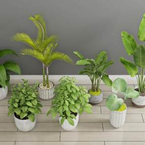 现代绿植3D模型【ID:244565881】