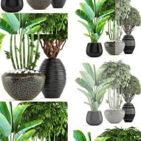 北欧植物盆栽摆设3D模型【ID:235746844】