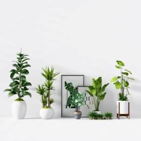 現代綠植花藝盆栽3D模型【ID:243796875】