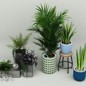 现代绿植盆花装饰组合3D模型【ID:231975887】
