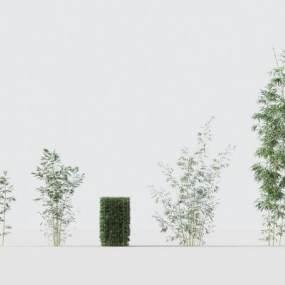 现代绿植竹子3D模型【ID:242493899】