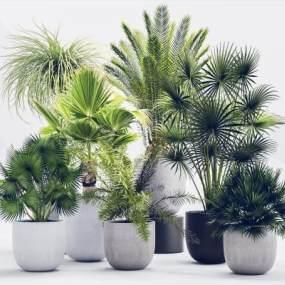现代绿植盆景盆栽组合3D模型【ID:231607818】