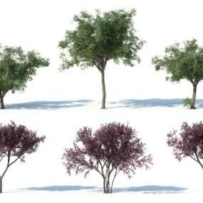 现代灌木3D模型【ID:249240835】