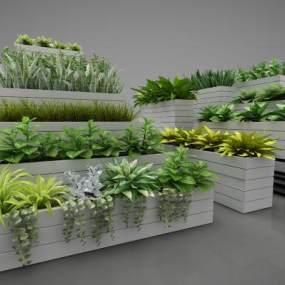 現代風格植物3D模型【ID:250534833】