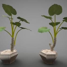 現代風格植物3D模型【ID:246971848】