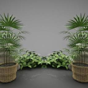 現代風格植物3D模型【ID:246972811】