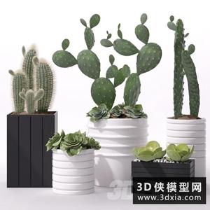 多肉植物組合國外3D模型【ID:229316723】