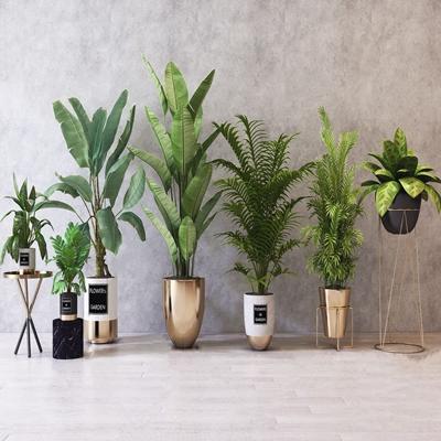 现代绿植盆栽组合3D模型【ID:234039882】