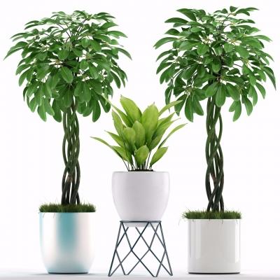 現代綠植盆栽3D模型【ID:328437870】