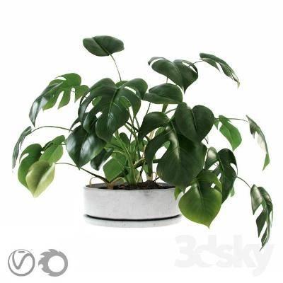 现代盆栽3D模型【ID:319846823】