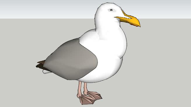 更新海鸥 鸟 动物 信天翁
