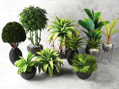 现代花艺盆景 现代盆栽盆景 吊兰 花瓶 绿植