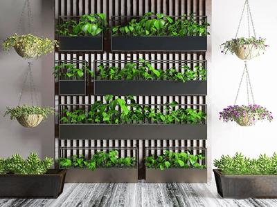 绿植植物吊兰花草盆栽植物墙 现代植物墙 绿植 植物 吊兰 花草 盆栽