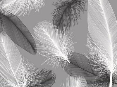 羽毛壁纸 黑白灰