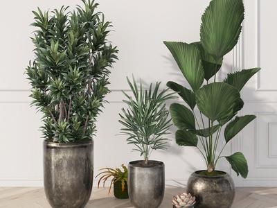 现代绿植盆栽 植物 植被 花盆 多肉 饰品 摆件