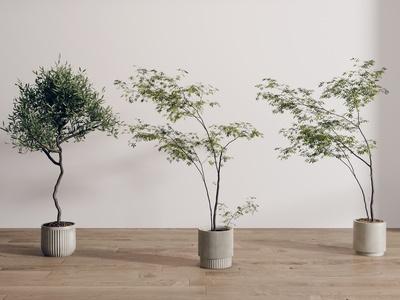 现代盆栽组合 绿植