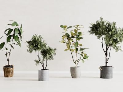 现代盆栽组合 编织框