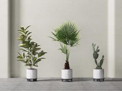 盆栽植物組合