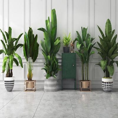 现代绿植盆栽组合 现代盆栽盆景 绿植 边柜 摆件 旅人蕉