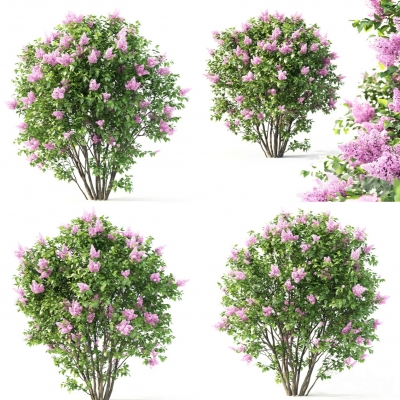 现代植物花丛3D模型